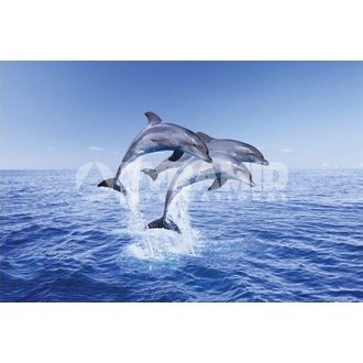 poszter Dolphin Trio - Pyramid Posters, PYRAMID POSTERS